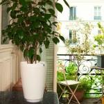 Plante-Parrot-Pot